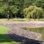 Ufer des grossen Teichs