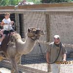 Camel Ride at the Safari Zoo