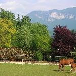 Horses at Ca' del Baldo.