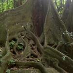 Rain Forest shot w/Captain Sunshine