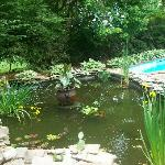 Fish Pond and the Pool
