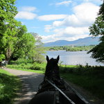 ‪Killarney Jaunting Cars Tours‬