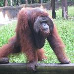 Mr. Jacky at Bali Zoo