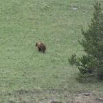 A Grizzly Bear on our last ride