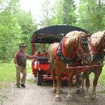 Hour ride to view elk on carriage.