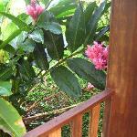 Flowers surrounding Cabin Deck