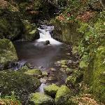 Mahon Falls Forest Walk