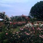 part of Hershey Rose Garden