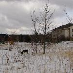 dogs out on a walk, hotel in background