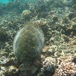 One of the locals on the house reef