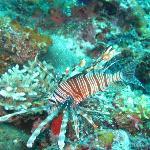 Diving with KoroSun Dive