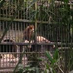 Small Cage where the Lion and Lioness are living
