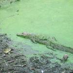 "Contaminated water, where turtles and crocodiles ""swim"""