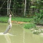 at the crocodile farm