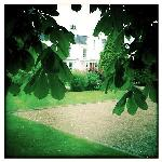 Through the horse chestnut tree leaves
