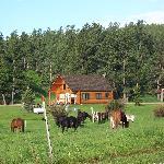 Trailside cabin view #2