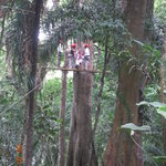 The guides sending off a zip line traveler.