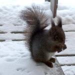 L'écureuil au chalet