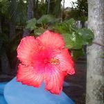 Noosa Flowers