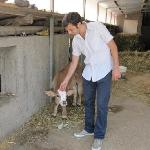 Roberto of Nido Verde at cow ranch for local cheese