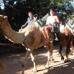 The camel safari, you must go on this when visiting oasis park