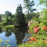 Asticou Gardens--Acadia National Park