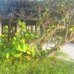 outside of beach house