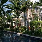 Villa Backyard / Pool / Tropical Gardens