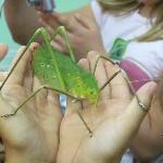 Photo de Victoria Bug Zoo