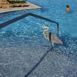 Heron taking a dip in the pool