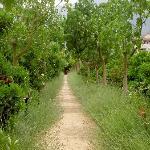 Pathway in the garden