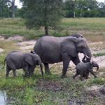 We followed this herd of elephants for quite some time, the baby made us all laugh out loud as i