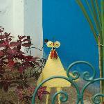 Le coq du jardin