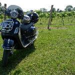 Vespa in vineyard