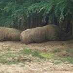 the poor rhinos