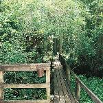 The Cyprus Swamp Trail Boardwalk