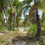 Ambo Island