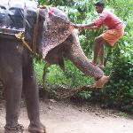 Elephat Ride preparation at Thekkady