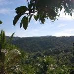 Blick vom Viewpoint in den Dschungel