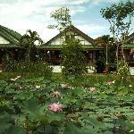 les  bungalows et les lotus