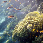 Beautiful corals with lots of fish
