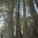 Purisima Creek Redwoods