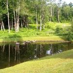Fish pond & back yard