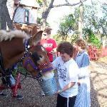 Kathy feeding the mules!