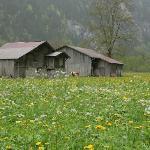 Beautiful wild flowers and scene in Lauderbrunnen Valley