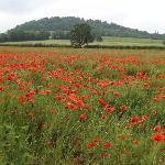 A field nearby