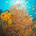 overview under water Verde Island