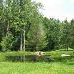 the pristine pond