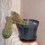même le cactus du hall semble maltraité