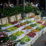 FLOWER MARKET JUNE 2010